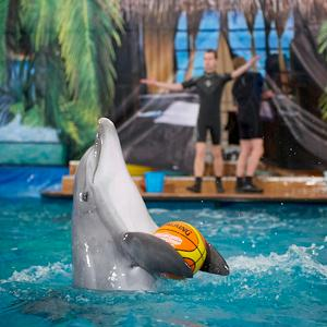 Дельфинарии, океанариумы Новой Усмани