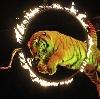 Цирки в Новой Усмани