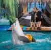 Дельфинарии, океанариумы в Новой Усмани