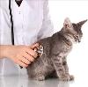 Ветеринарные клиники в Новой Усмани
